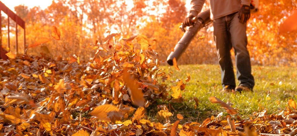 Leaf Removal Services In Amp Around Annapolis Md
